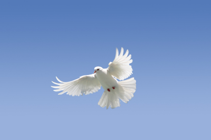 Dove: emblem of the Holy Spirit